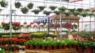 Hűtés kerti üzletek